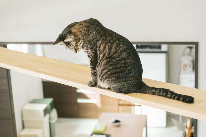 猫と引っ越しの様子